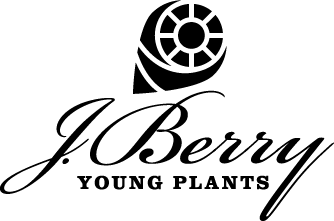 J Berry Young Plants
