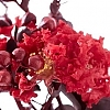 Crapemyrtle_Crimson_Red