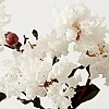 Crapemyrtle_Pure_White_2