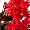 Crapemyrtle_Red_Hot